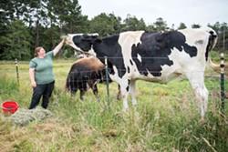 ncj.insider.biggest.steer.dsc_1099.jpg