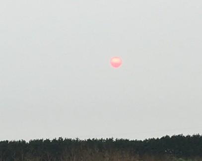 The red, smoke-filtered sun over the Arcata Bottoms. - THADEUS GREENSON