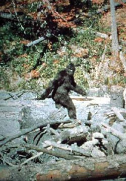 Clap if you believe in Bigfoot. - FROM THE PATTERSON-GIMLIN FILM.