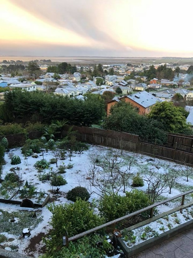Early gardens and fruit trees in Arcata got a shock last night. - SUBMITTED