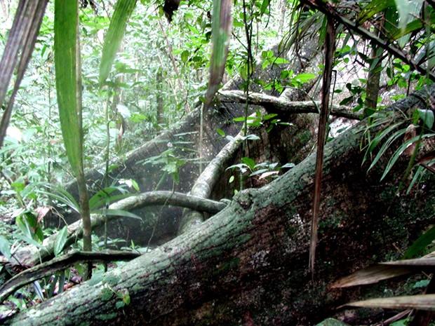 dl_rain_forest_floor_pic_panama_2002.jpg