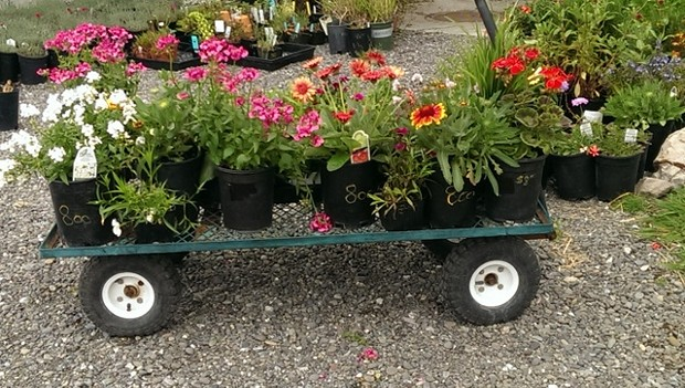 A wagonload of blooms for the garden