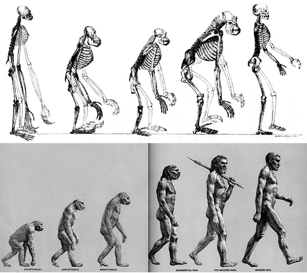 "Above: When Thomas Huxley included this illustration in his Evidence as to Man's Place in Nature in 1863, he inadvertently gave us the template for an endless succession of ""evolution = progress"" T-shirts. Below: ""The March of Progress"" presents 25 million years of human evolution. This fallacious image was created for the Life Nature Library, published in 1965."