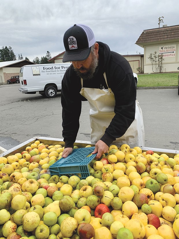 Humboldt Cider Co. co-founder Jamie Ashdon washes apples from Food for People's gleaning program.