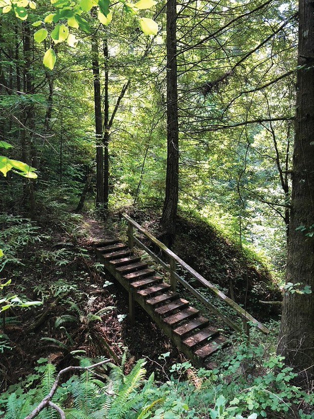 The stairs to Humboldt Grove, a testimonial to the hard work of dedicated trailblazers.