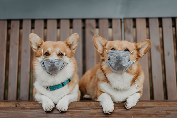 Please enjoy these very good boys in masks as a palate cleanser.