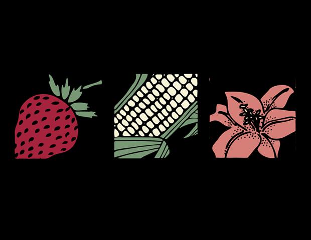 2019_color_logo_ncga_hcfm.png