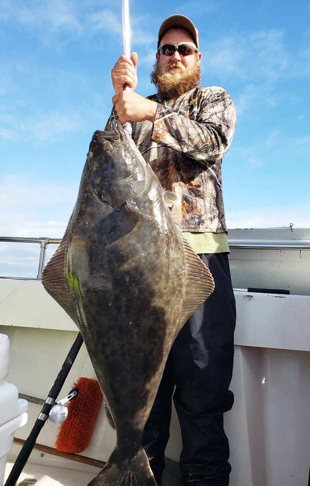Mark Nelson of Chester landed this nice Pacific halibut Saturday while fishing out of Eureka aboard the Seaweasel II.