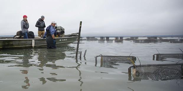 Humboldt Bay Oyster Tour.