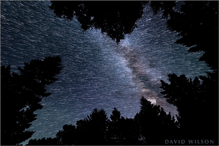 Looking through a canopy of Douglas-fir, we see paths that the stars made over the course of several minutes. The Celestial Equator splits the star field; the stars on top are revolving around the northern polar axis, while the lower stars are revolving around the southern polar axis. - DAVID WILSON