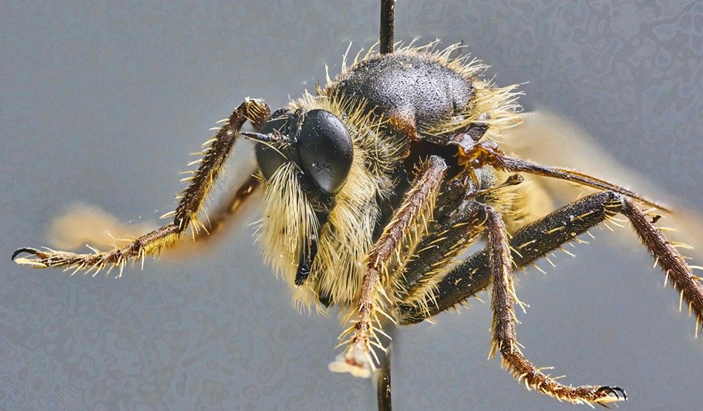 Disintegrating robber fly. It took more than 280 exposures to compile this image. - PHOTO BY ANTHONY WESTKAMPER