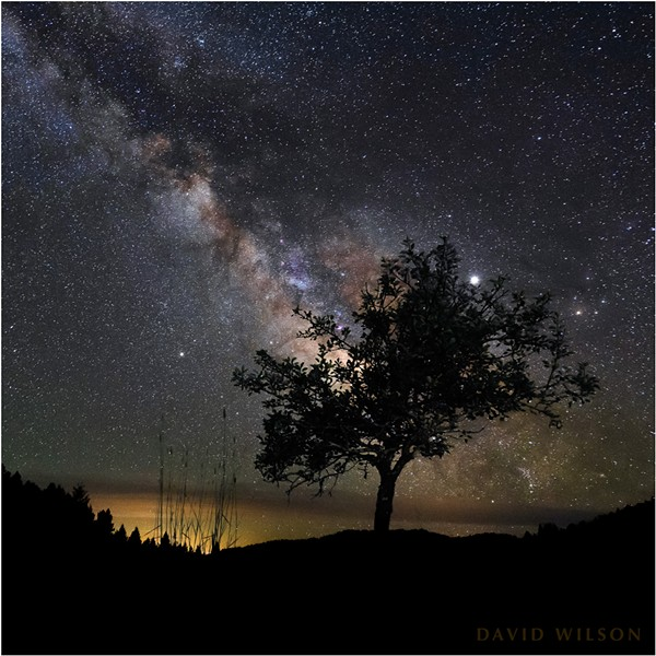Some of the visible galactic points of interest that are reasonably identifiable passing over the old pear tree as Earth spins beneath them. Humboldt County, California. - DAVID WILSON