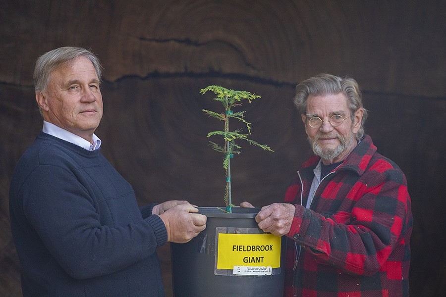 Steve D'Agati (left) and Eric Hollenbeck hold up the sapling in front of the Fieldbrook Giant's cross-section at the Blue Ox. Photo by Thomas Lal