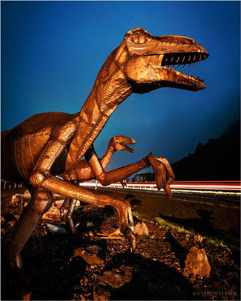 The Raptors contemplate the wisdom of crossing US 101. Car light streaks along the freeway are evidence that the Raptors might have been seen by passing motorists, but I have heard no reports. Humboldt County, California on March 6, 2020. - DAVID WILSON