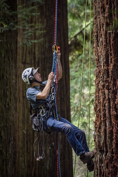 One of the Synergo aerial construction workers uses a special technique using ascenders to climb a rope and return to  where a platform is being installed for the Redwood Sky Walk. - PHOTO BY MARK LARSON