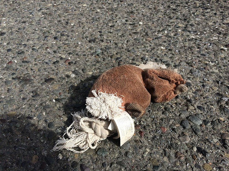 You see a lot of roadkill when biking around. This poor guy. - JENNIFER SAVAGE