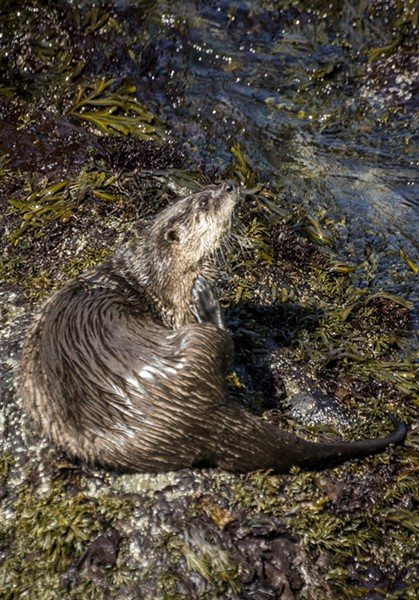 A scruffy fellow having a scratch on the shore. - PHOTO BY MARK LARSON