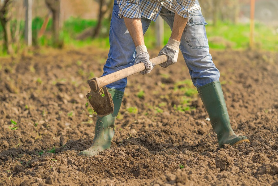 Tilling the soil, is a good way to aerate soil so that plant roots can get oxygen.