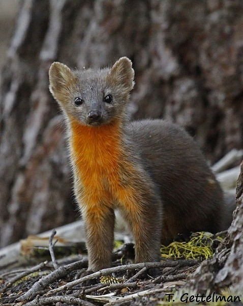 Cute and endangered? - FILE