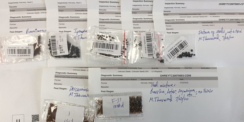 At the USDA  National Identification Service' Lab in Beltsville, Maryland, Animal and Plant Health Inspection Service Plant Protection and Quarantine botanists analyze and catalog seed samples received, unsolicited, from overseas.