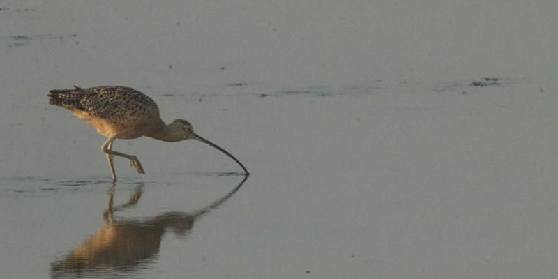Bird Walks Are Back