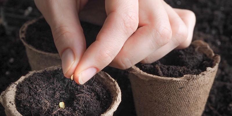 RCAA Plant and Seed Exchange