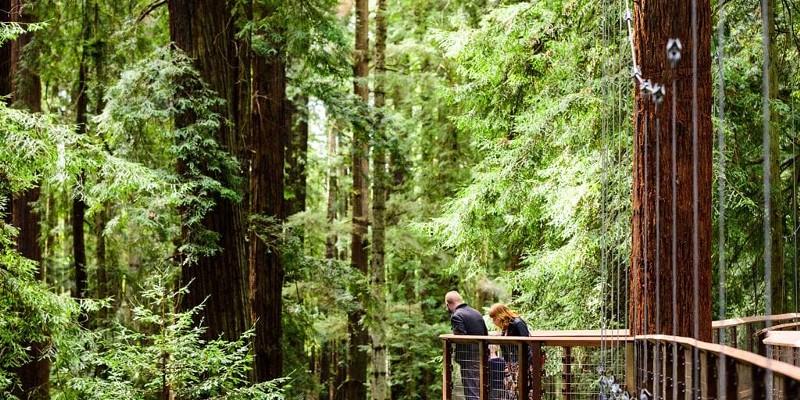 A platform on the Redwood Sky Walk.