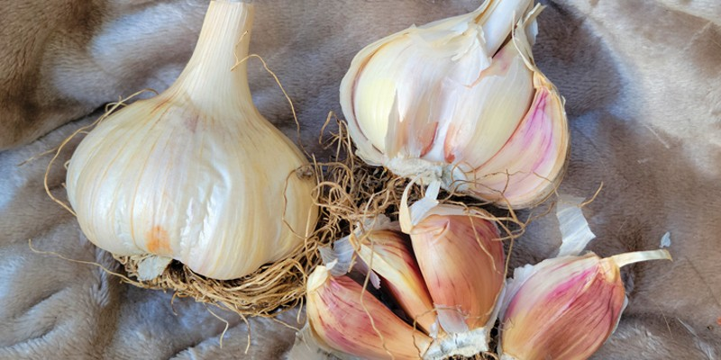 Bulbs at your local garden shop beat the scrawny dollar store ones every time.