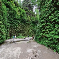 Fern Canyon.