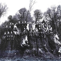 A group of school children stand on the Fieldbrook Giant's stump.