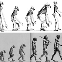 """Above: When Thomas Huxley included this illustration in his Evidence as to Man's Place in Nature in 1863, he inadvertently gave us the template for an endless succession of """"evolution = progress"""" T-shirts. Below: """"The March of Progress"""" presents 25 million years of human evolution. This fallacious image was created for the Life Nature Library, published in 1965."""