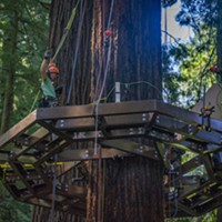 One of the Synergo aerial construction employees paused to wave at walkers on the trail below while installing one of  several Redwood Sky Walk platforms that encircle redwood trees.