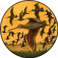 Flying Godwits artwork by Gary Bloomfield