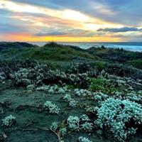 Friends of the Dunes Presents Naturalist Notes Webinar Series