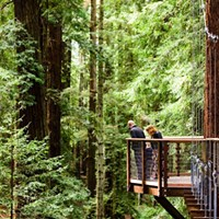 A platform on the Redwood Sky Walk.