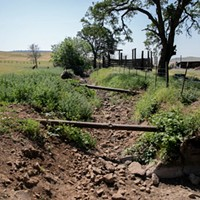A creek that once ran through Megan Brown's property is already dry before the summer comes on April 22, 2021