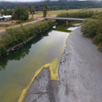Cyanobacteria, also known as blue-green algae, was confirmed in samples taken on the Mad River last year by Blue Lake Rancheria scientists. Cyanobacteria is considered harmful to people and pets and should be avoided.