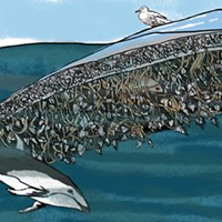 Amy Uyeki, illustrations from Kamome: A Tsunami Boat comes Home, at Morris Graves.