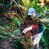 Tim Canning relocates a fern during trail maintenance day in Arcata Community Forest.