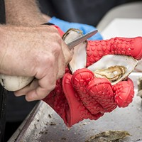 Tens of thousands of locally produced oysters met their fate at the 27th annual Oyster Festival.