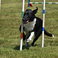 Lost Coast Kennel Club Dog Agility Trials and Barn Hunt