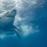 Sharktober Part 1