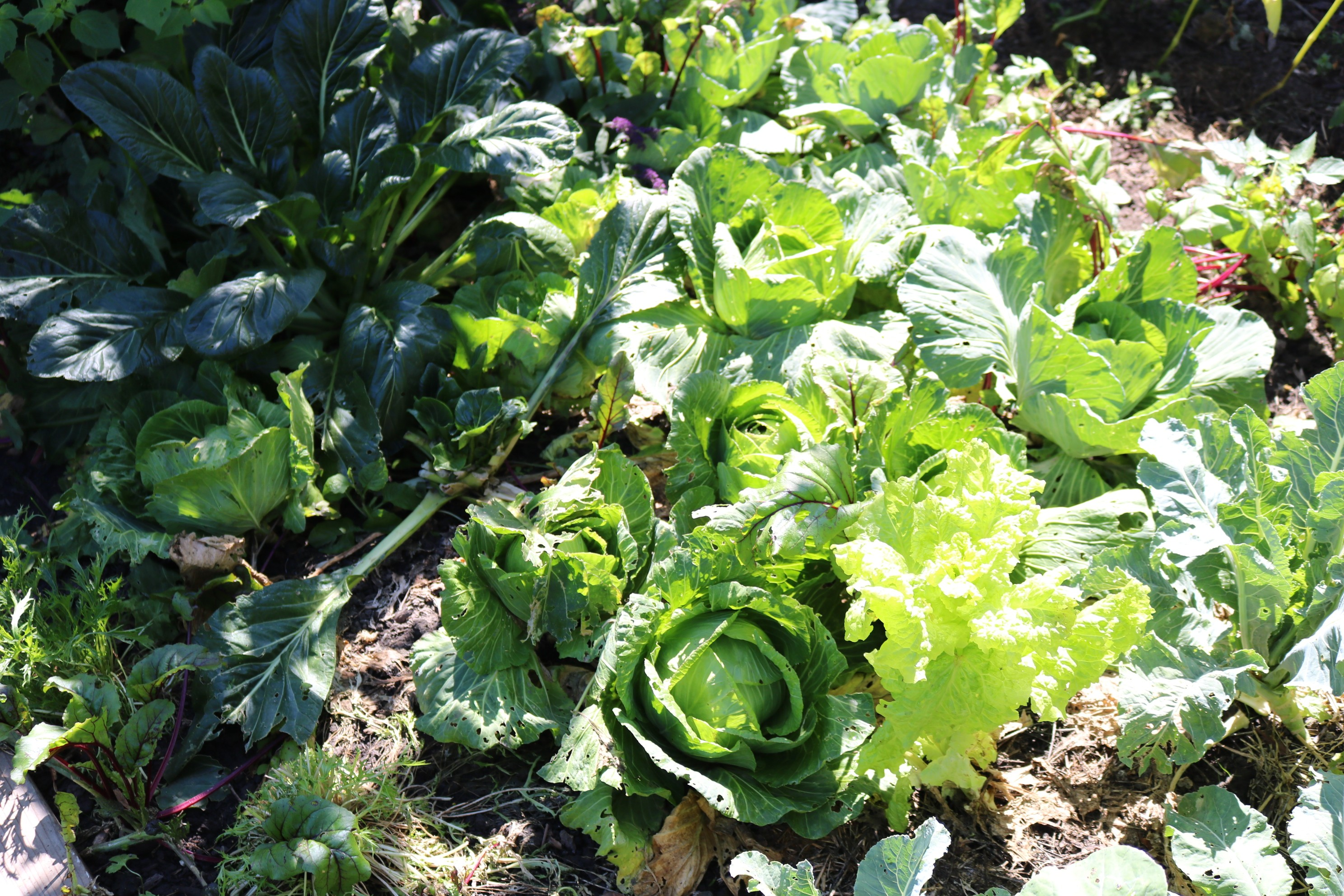 'Responsible Resilience' on Display at Cooperation Humboldt's Edible Garden Tour