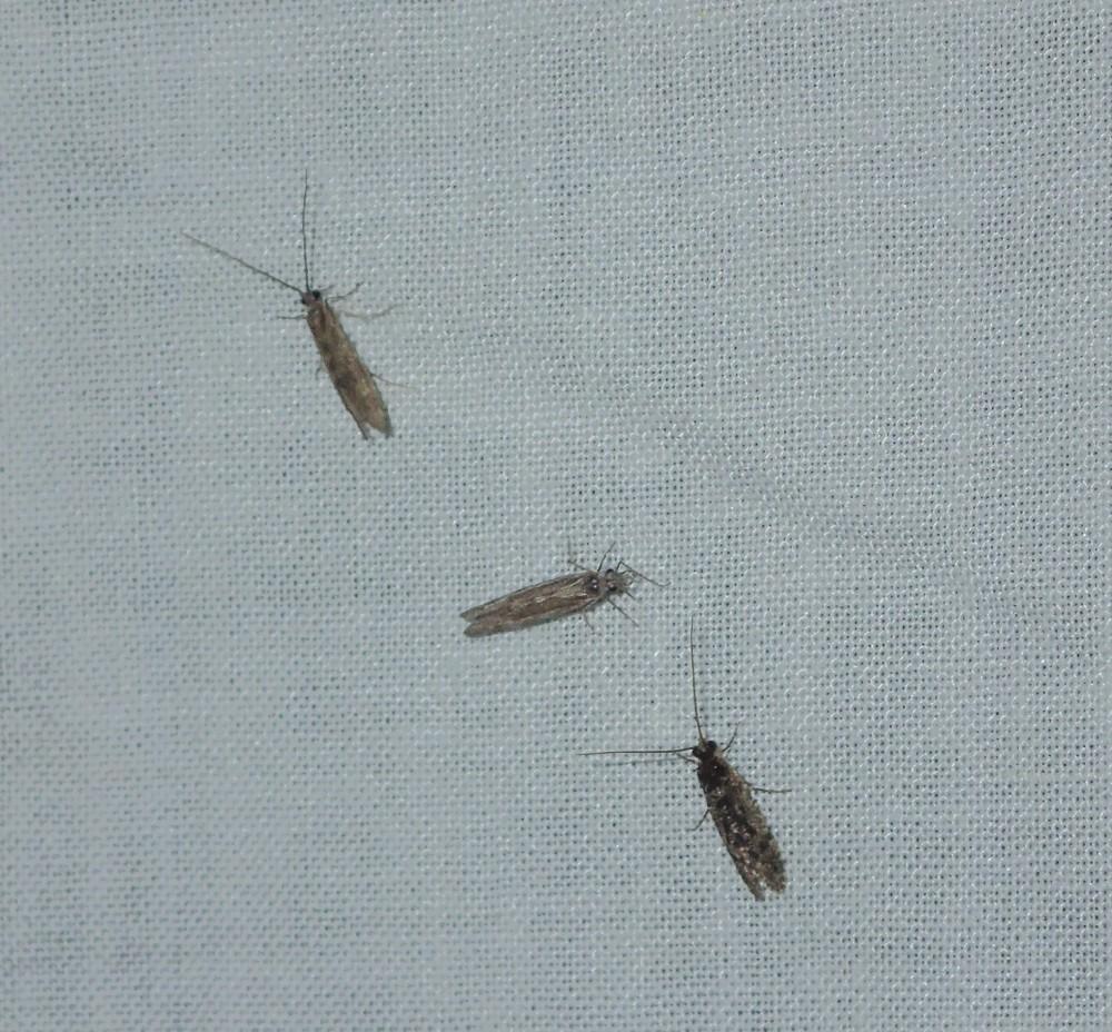 HumBug: Like Moths to a Black Light | News Blog