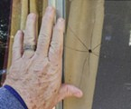 Showing the size of the creature next to my hand.
