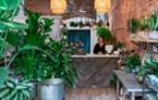 Artful plant shop Sekoya.