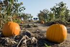 Warren Creek Farms pumpkin patch in Blue Lake.