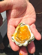 Greg Dale proffers a Coast Seafoods oyster.
