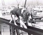 Mac the Diving dog was one of Glenn Miller's chosen mates aboard the<i> Coral Sea</i>. Miller made a few attempts to make Mac an entertainment icon, which involved Mac wearing a weighted belt and jumping into the ocean.