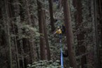 Joey Croft walking in the middle of the midline that measured to be 400 feet in the Arcata Community Forest.